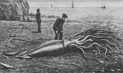 640px-Giant_squid_catalina2